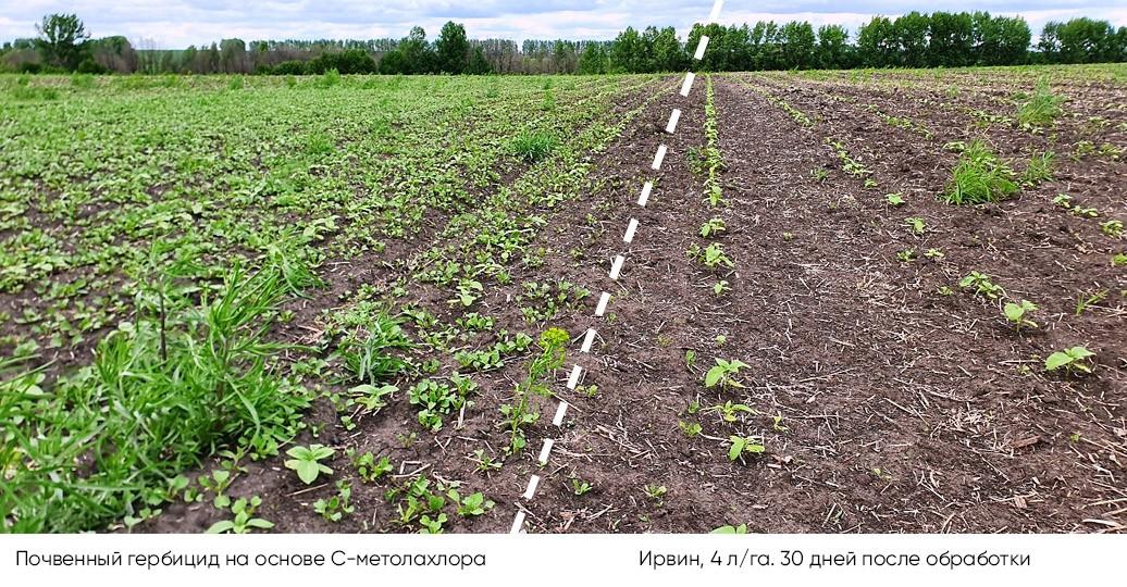 Правила работы с почвенными гербицидами от «Агро Эксперт Груп»