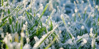 Феразим Грин - ранневесенняя защита озимых зерновых