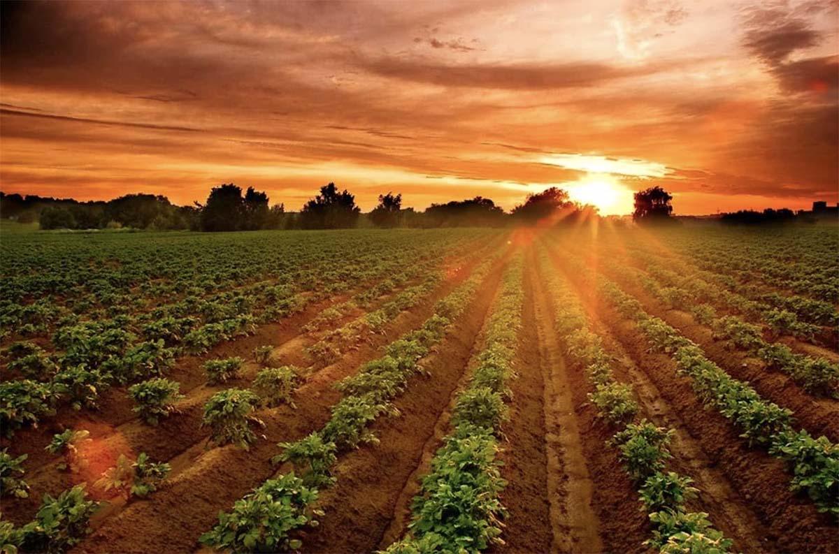 Photo of Фунгициды «Агро Эксперт Груп» для защиты картофеля от фитофтороза
