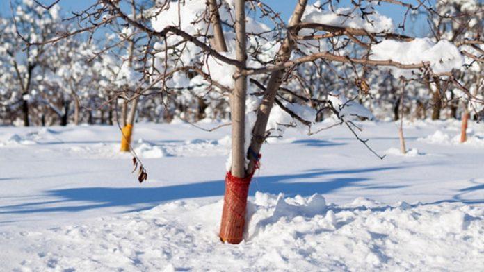 Защита сада от мороза