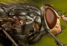 Как бороться с мухами