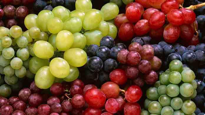 Виноград — секреты выращивания лозы
