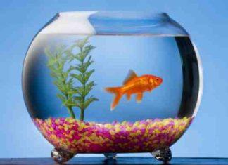 Круглый аквариум преимущества и недостатки
