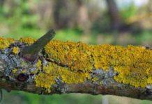 Пионеры растительного мира - Лишайники