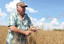 КФХ Сергея Данилова опыт получения стабильного урожая в зоне рискованного земледелия
