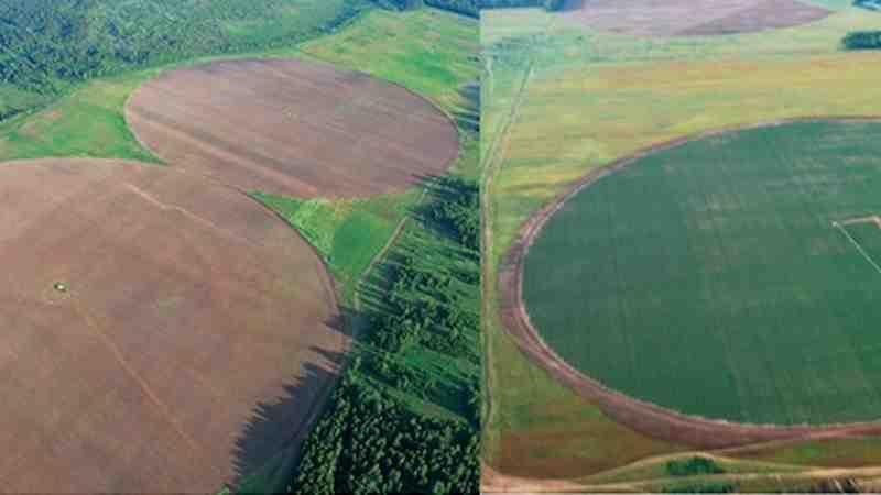 ООО «МЕЛАГРО»: опыт выращивания чипсового картофеля и высокого урожая зерновых