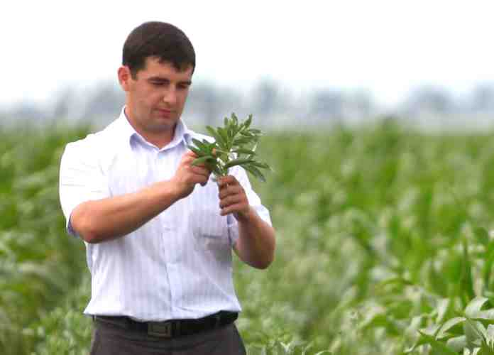 ЗАО Племзавод «ИРМЕНЬ» растениеводческий опыт одного из лидеров молочной отрасли