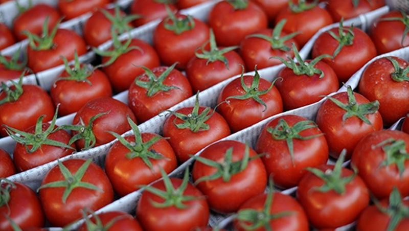 Аграрии просят еще 7-8 лет не отменять эмбарго на томаты из Турции