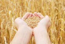 Апрель завершился падением цен на зерно