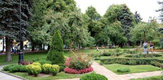 Городские растения выделяют во время жары вредный озон