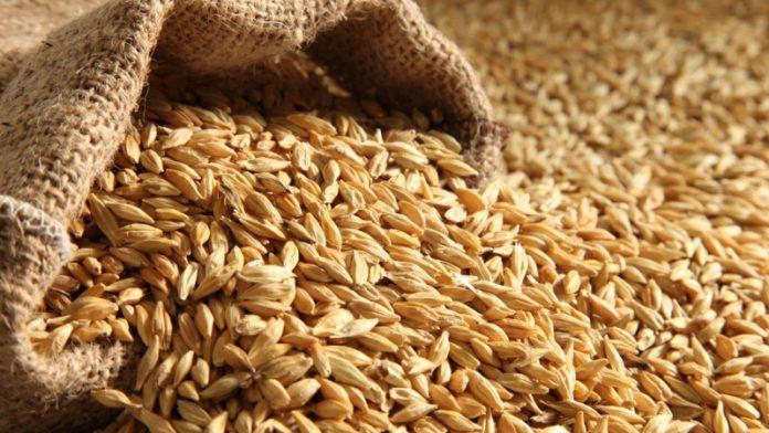Минсельхоз планирует в конце лета запустить закупочные интервенции на рынке зерна
