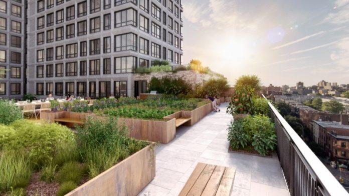 Мода на сельское хозяйство на крышах многоэтажных домов