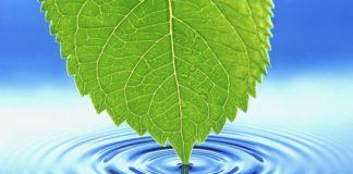 Растения умеют искать воду