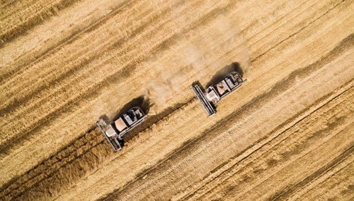 Турция сняла ограничения на поставки российской пшеницы