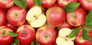 В России появится первый польский яблоневый сад