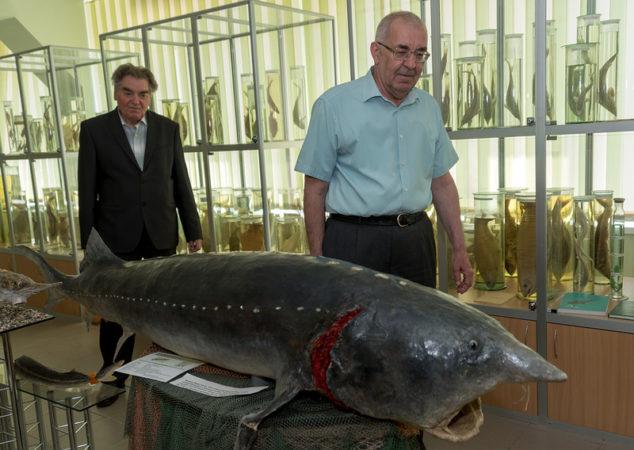 Рыба Юрского периода