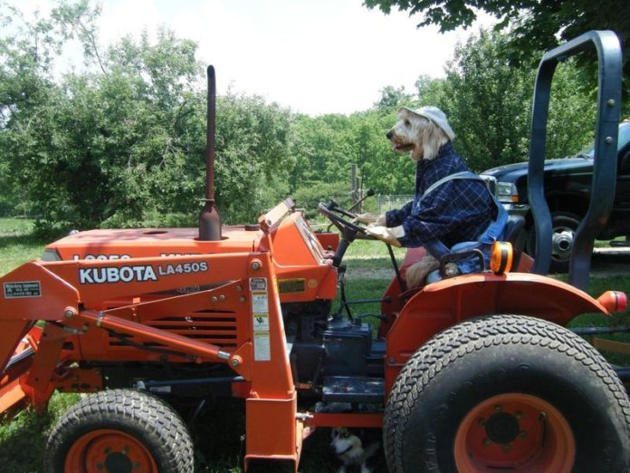 Собака на тракторе придавила 70-летнего хозяина-мультимиллионера