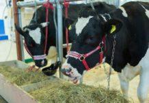 Технологии заготовки кормов для животноводства на зиму обсудят в Подмосковье 14 июня