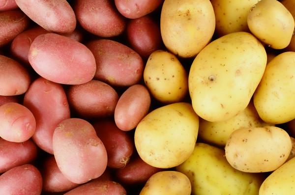 Увеличить сельхозпроизводство поможет развитие селекции