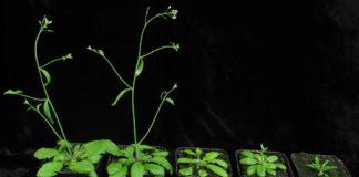 Ученые открыли новый способ повышения устойчивости растений