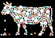Фермеры не воспринимают всерьез вред антибиотиков, применяемых в сельском хозяйстве