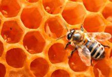 В Орле в подморе пчел обнаружен лямбда-цигалотрин (опасный пестицид)