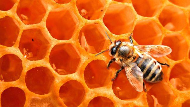 В Орле в подморе пчел обнаружен опасный пестицид «лямбда-цигалотрин»
