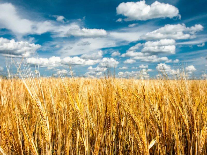 В Орловской области аграриям из бюджета перечислено более миллиарда рублей