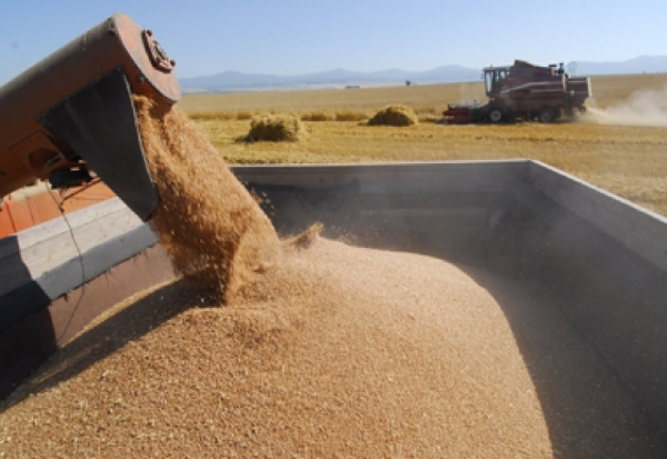 Интервенционное зерно поедет за рубеж