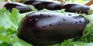 Как правильно вырастить урожай баклажанов в теплице
