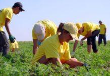 Каникулы на грядках: в Беларуси дети изучают органическое сельское хозяйство