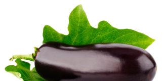 Растим баклажаны без болезней и вредителей
