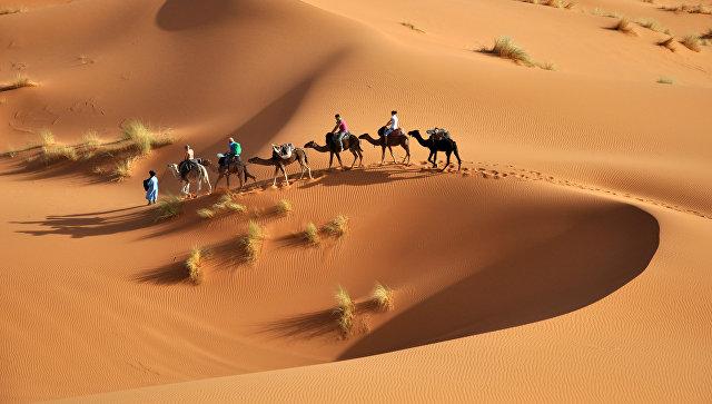 Ученые заявили, что Сахара может полностью «позеленеть» через столетие