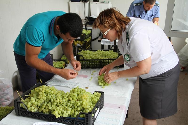 Турецкий виноград с сюрпризом