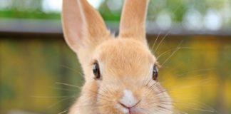 50 практических советов по разведению кроликов для начинающих!