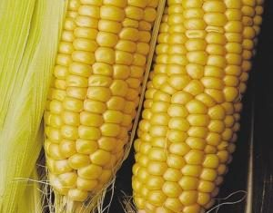 Сахарная кукуруза для идеального здоровья