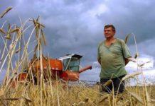 Власти Марий Эл планируют объединить мелких фермеров для развития сельского хозяйства
