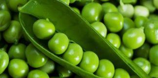 Кормовой и овощной горох, его виды и особенности возделывания