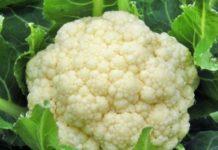 Цветная капуста - советы по выращиванию