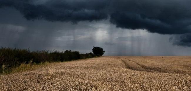 В Литве могут ввести чрезвычайное положение в сфере сельского хозяйства