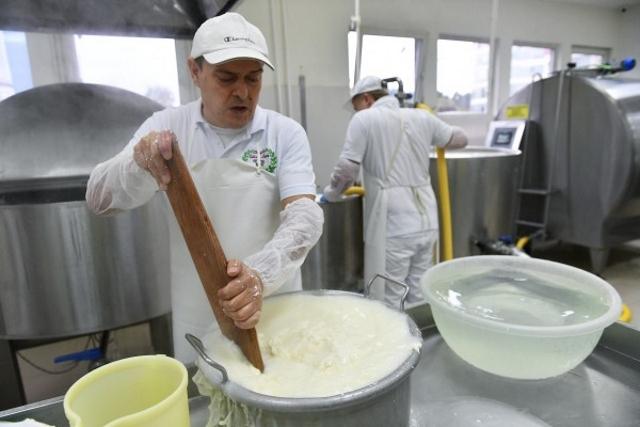 В Подмосковье стартовал прием заявок на получение грантов для сыроварен