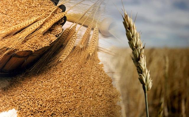 В ближайшие 5 лет Россия может увеличить годовой объем экспорта зерна на 30 млн. тонн