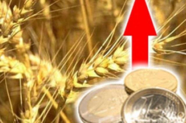 Закупочные цены на зерно в России начали расти - Минсельхоз