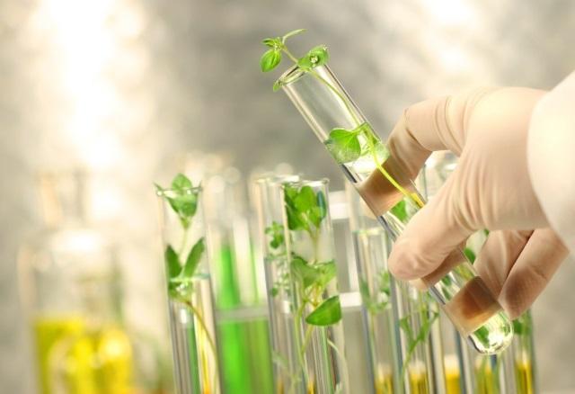 Проблемы и перспективы внедрения агробиотехнологий в интенсивное сельское хозяйство РФ обсудят на «Югагро»