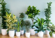 Топ самых популярных комнатных растений