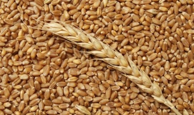 Алтайские аграрии удвоили поставки зерна в Китай
