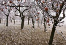 Зимние хлопоты садоводов