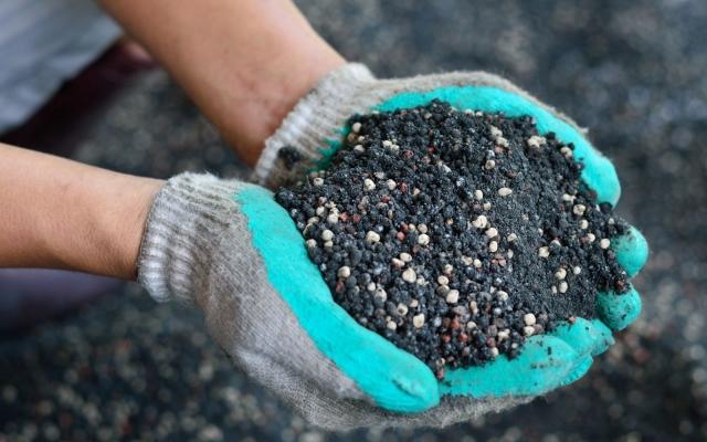 Подкормка озимого чеснока весной - чем подкормить после зимы