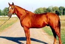 Породы лошадей - виды, особенности и характеристики
