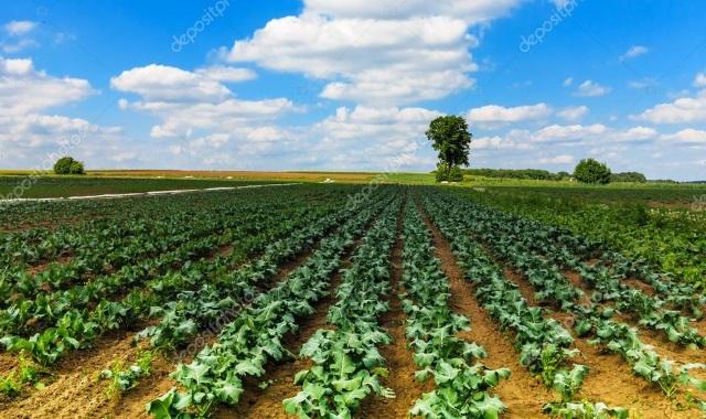 Волгоградская область обеспечила себя овощами более чем в два раза